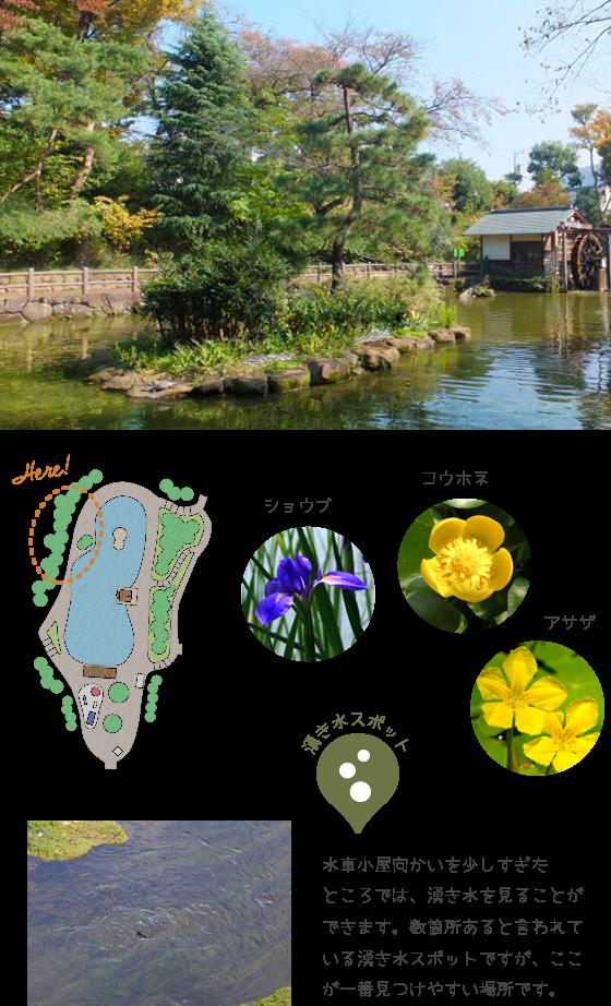 湧き水スポット 水車小屋向かいを少しすぎたところでは、湧き水を見ることができます。数箇所あると言われている湧き水スポットですが、ここが一番見つけやすい場所です。