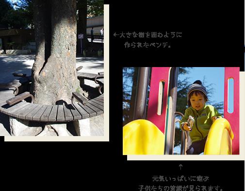 大きな樹を囲むように作られたベンチ。元気いっぱいに遊ぶ子供たちの笑顔が見られます。
