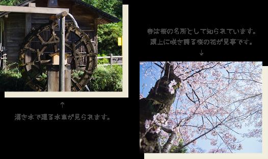 湧き水で廻る水車が見られます。春は桜の名所として知られています。頭上に咲き誇る桜の花が見事です。