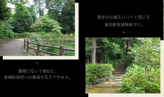 園路に沿って進むと、東側散策路への階段が見えてきます。裏手の公園入り口へと通じる東側散策路階段です。